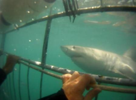 mergulho com tubaroes
