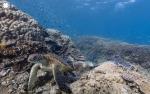 mergulho virtual no fundo do mar