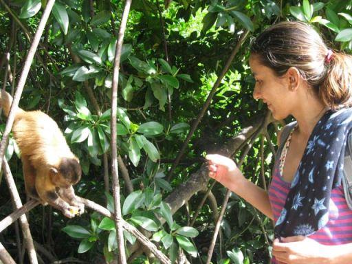 macacos em vassouras