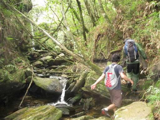trilha do guatambu