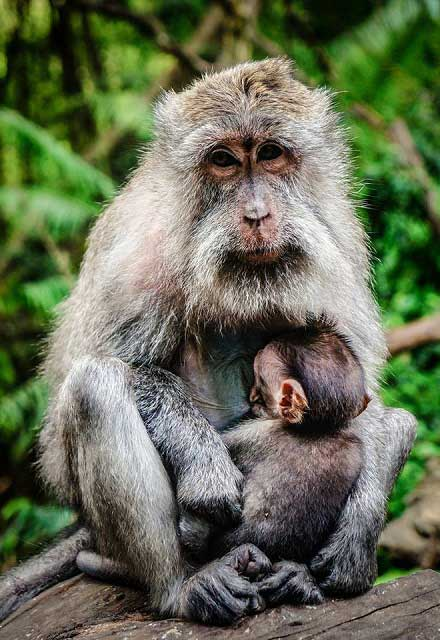 Ilha dos macacos macaco eacute irmao - 4 5