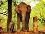 elefantinho no parque