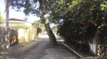 arvore na rua