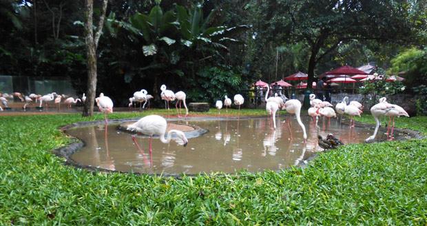 flamingo parque das aves
