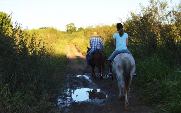 passeio cavalo bonito