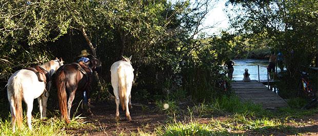 cavalo rio formoso
