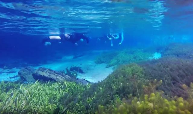rio sucuri mergulho