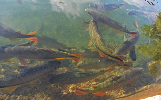 peixes em rio transparente