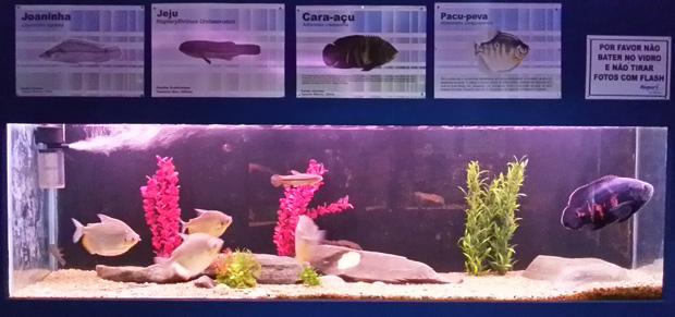 peixes de bonito