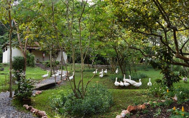 fazenda estancia mimosa