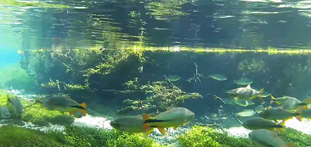 flutuacao em rio do mato grosso do sul
