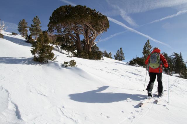 snowboard arvore
