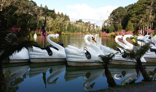 lago negro com cisnes