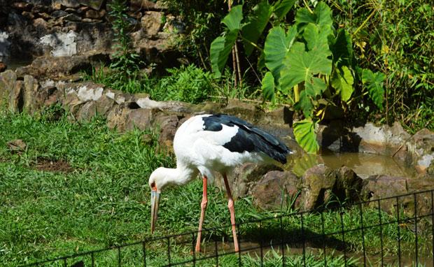 aves gramado