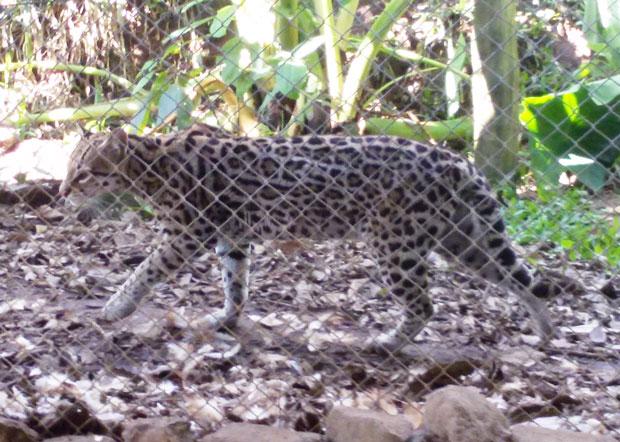 gato gramado zoo
