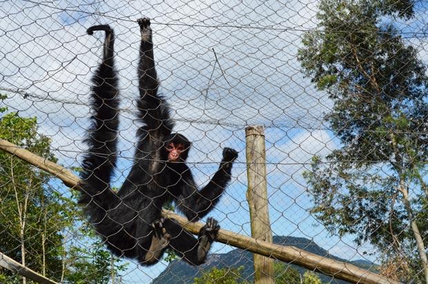 macaco gramado zoo