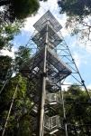 Torre de observacao floresta