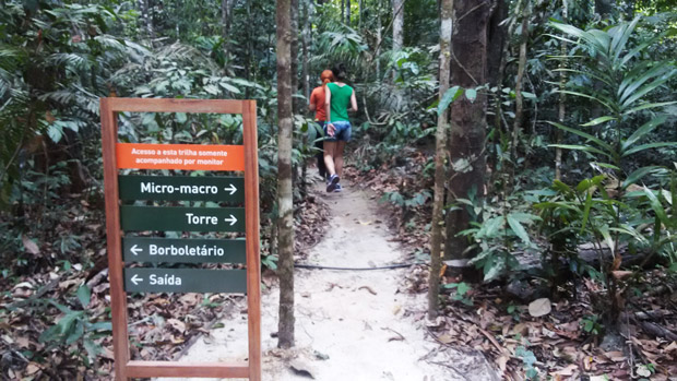 trilha floresta amazonica